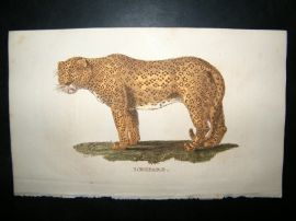 Brightly 1811 Antique Hand Col Print. Leopard